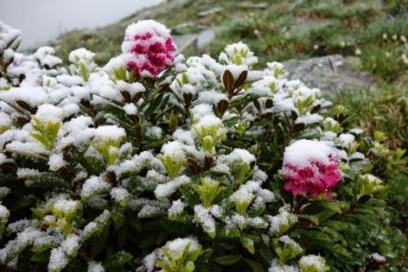 14053278367855-02_Fleurs_sous_la_neige